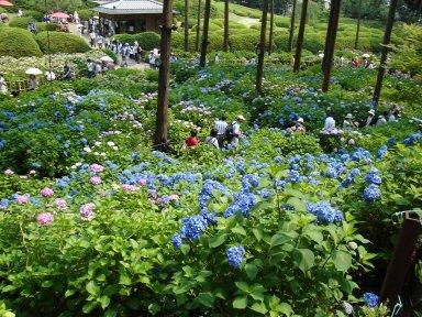 アジサイ庭園(6月).jpg