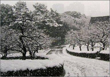 冬の梅林坂.jpg