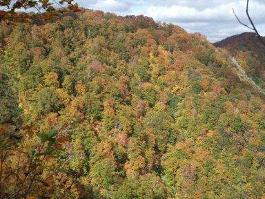 白神山地の紅葉.jpg