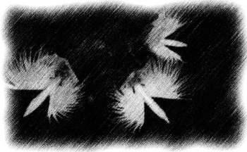 鷺草:鉛筆.JPG